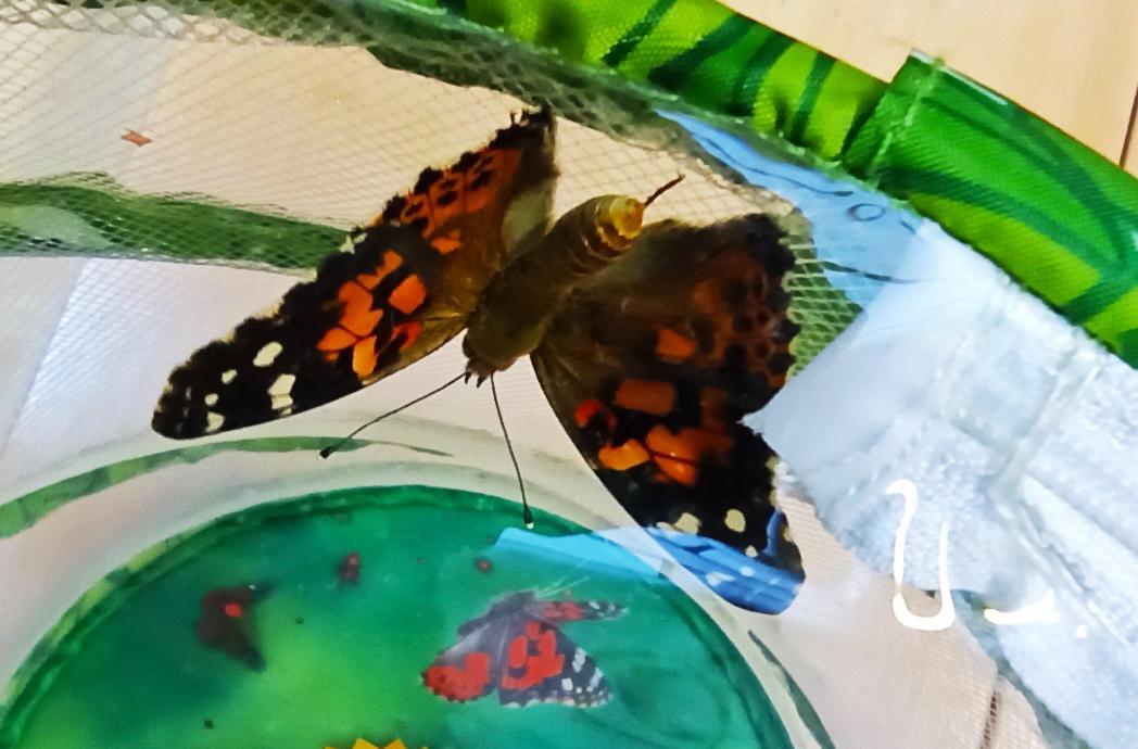 """""""Schmetterlinge"""" Die kleine Raupe Nimmersatt"""